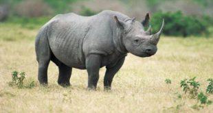 Giải pháp bảo vệ động vật hoang dã