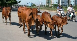Chính sách hỗ trợ phí bảo hiểm nông nghiệp