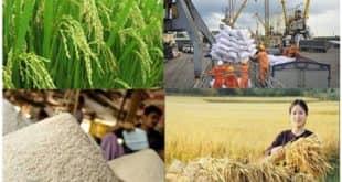 Chính sách hỗ trợ khôi phục phát triển nông nghiệp