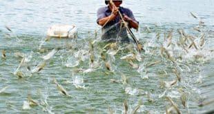 thủy sản nuôi chủ lực của Việt Nam