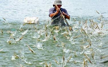 Luật Thủy sản