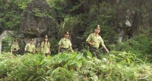 Nghị định số01/2019/NĐ-CPvề Kiểm lâm và Lực lượng chuyên trách bảo vệ rừng