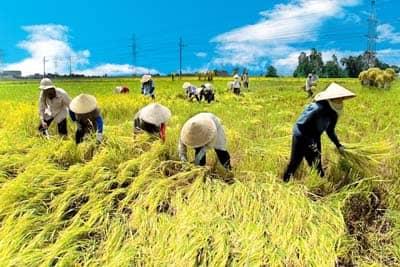 Quyết định số 22/2019/QĐ-TTg của Thủ tướng Chính phủ : Về thực hiện chính sách hỗ trợ bảo hiểm nông nghiệp